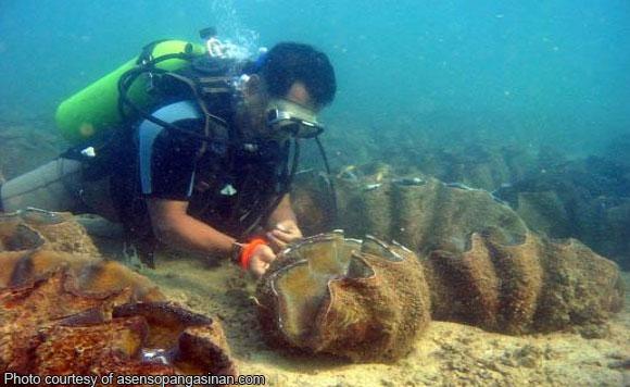 di tao di rin aso pangasinan foster program adopts giant clams